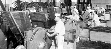 vintage photo of men working at machines at US tobacco company facility