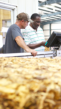 two men working on computer beside dried tobacco bales