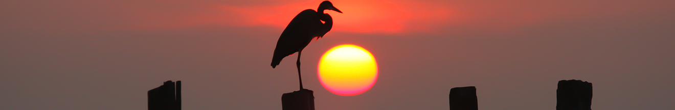 crane standing on groyne in chesapeake bay in front of sunset